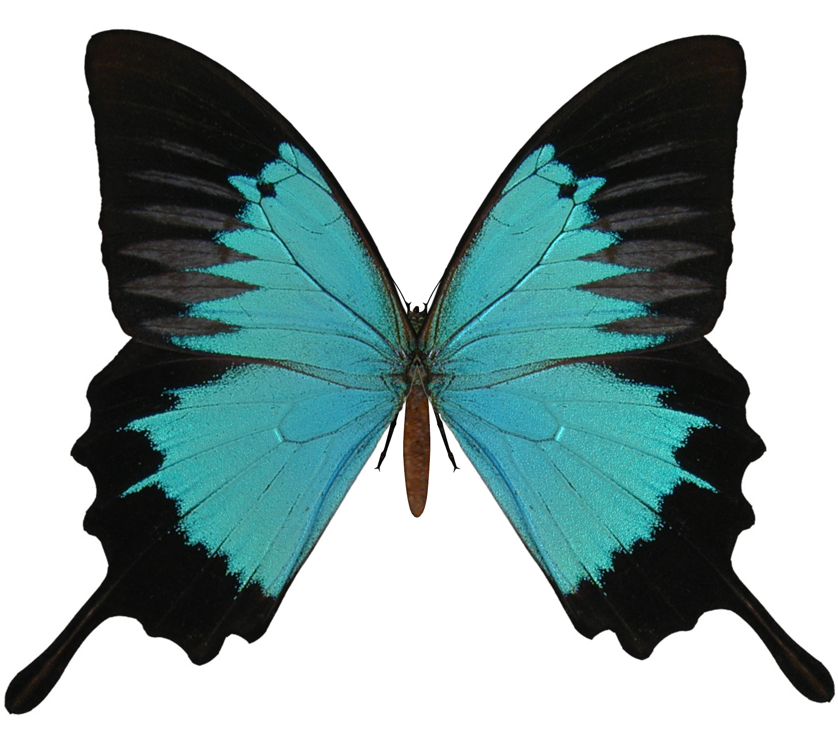 e_s_butterfly_v_by_elevit_stock