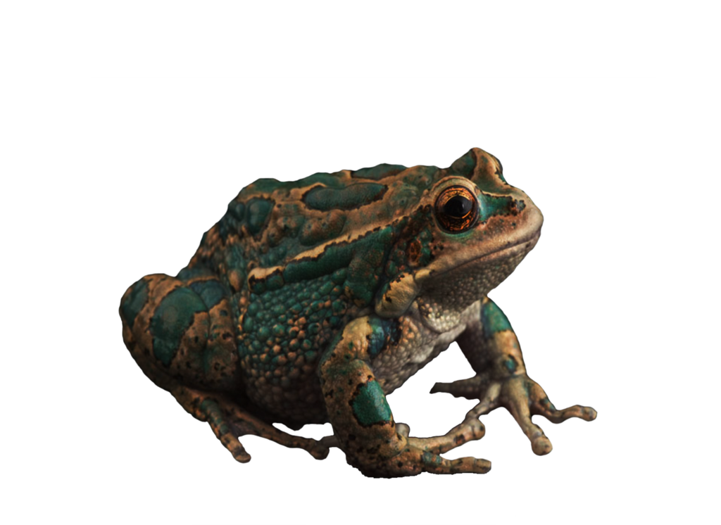 frog_by_moonglowlilly-d5qdq81